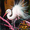 White feathered bird puzzle