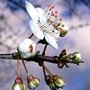 White Flower Jigsaw