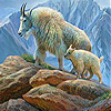 White old mountain goat slide puzzle