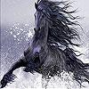 Wild black horse slide puzzle