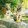 Wild cats slide puzzle