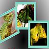 Wild green lizard puzzle
