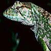 Wild iguana slide puzzle