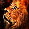 Wild lion slide puzzle