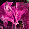 Fantastic pink foxes puzzle